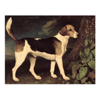 Ringwood, a Brocklesby Foxhound, 1792 Postcard