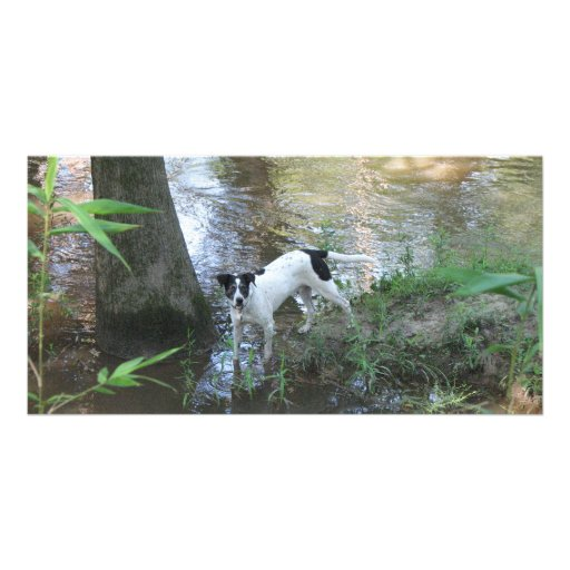 Rio by the Tchefuncte Customized Photo Card