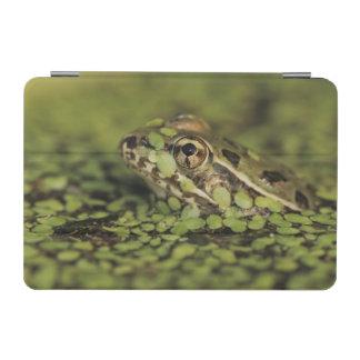 Rio Grande Leopard Frog, Rana berlandieri, iPad Mini Cover