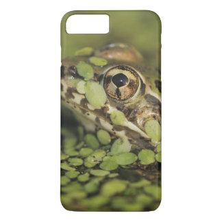 Rio Grande Leopard Frog, Rana berlandieri, iPhone 7 Plus Case