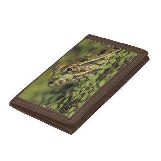 Rio Grande Leopard Frog, Rana berlandieri, Tri-fold Wallet