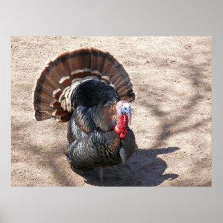 Rio Grande Wild Turkey Poster