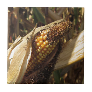 Ripe and ready to harvest ear of corn ceramic tile