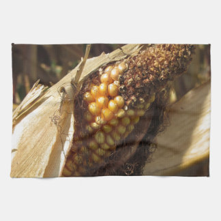 Ripe and ready to harvest ear of corn hand towel