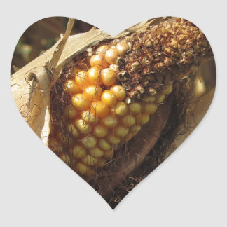 Ripe and ready to harvest ear of corn heart sticker