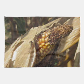 Ripe and ready to harvest ear of corn kitchen towels