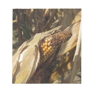 Ripe and ready to harvest ear of corn notepad