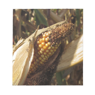 Ripe and ready to harvest ear of corn notepads