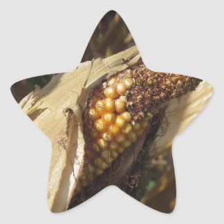 Ripe and ready to harvest ear of corn star sticker