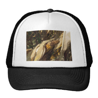 Ripe and ready to harvest ear of corn trucker hat