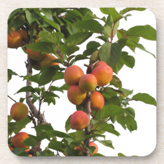 Ripe apricots hanging on the tree beverage coaster