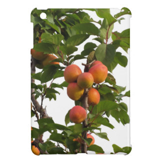 Ripe apricots hanging on the tree iPad mini cover