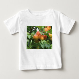 Ripe apricots hanging on the tree . Tuscany, Italy Baby T-Shirt