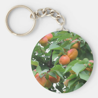 Ripe apricots hanging on the tree . Tuscany, Italy Basic Round Button Keychain