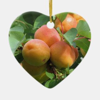 Ripe apricots hanging on the tree . Tuscany, Italy Ceramic Heart Ornament
