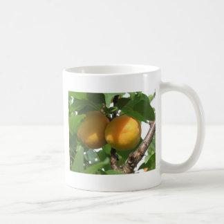 Ripe apricots hanging on the tree . Tuscany, Italy Coffee Mug