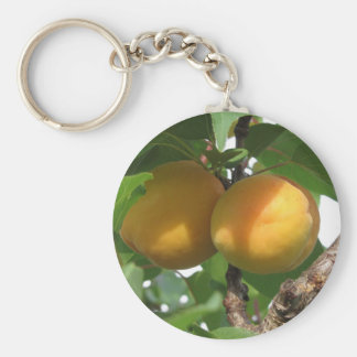 Ripe apricots hanging on the tree . Tuscany, Italy Keychain