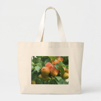 Ripe apricots hanging on the tree . Tuscany, Italy Large Tote Bag