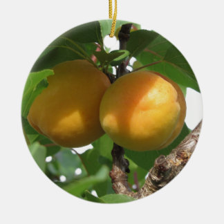 Ripe apricots hanging on the tree . Tuscany, Italy Round Ceramic Ornament