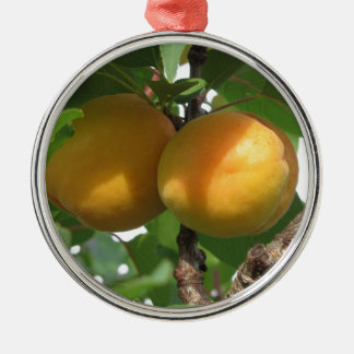Ripe apricots hanging on the tree . Tuscany, Italy Silver-Colored Round Ornament