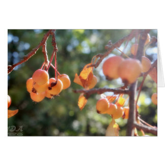 Ripe Crab Apples Card