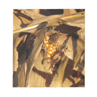 Ripe ear of corn at sunset notepads