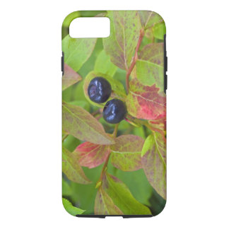 Ripe huckleberries in the Flathead National iPhone 7 Case