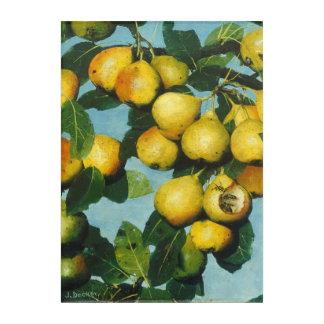 Ripening Bartlett Pears by Joseph Decker Acrylic Print