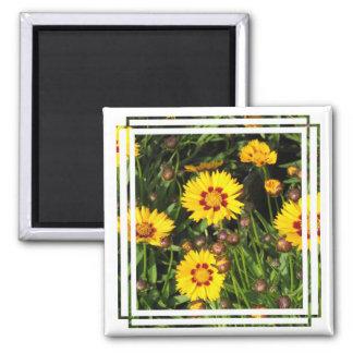 Rising Sun Coreopsis Square Magnet