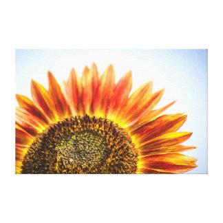 Rising Sunflower Canvas Print