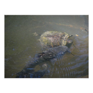 River Catfish and Turtle Poster