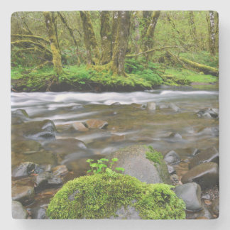 River in green forest, Oregon Stone Coaster