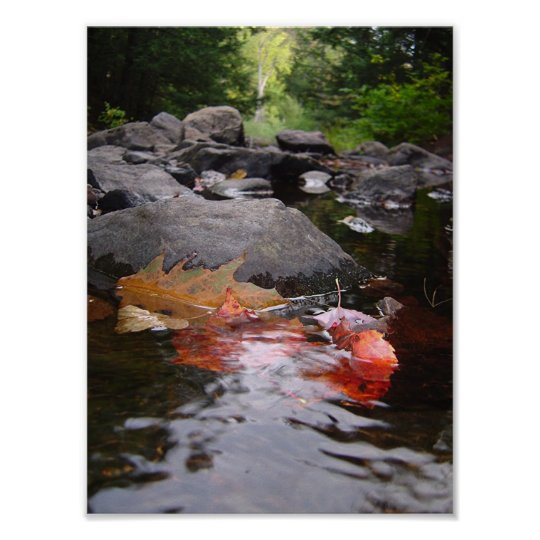River Leaves Poster