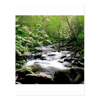 River Middle Prongdogwoods Smoky Tennesse Postcard