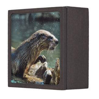 River Otter Animal-lover's Wildlife Photo Premium Gift Boxes