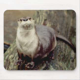 River Otter Posing Mouse Pad
