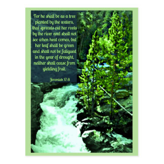 River Rock Tree Scripture Postcard