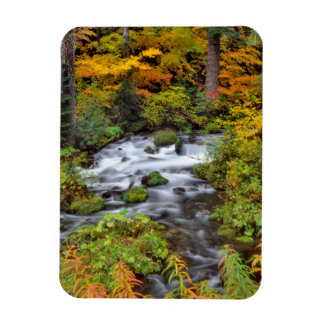River through forest, Fall, Oregon Magnet