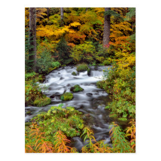 River through forest, Fall, Oregon Postcard