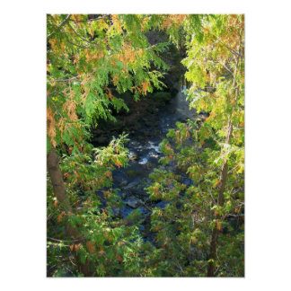 river thru the trees poster