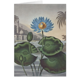 RJ Thornton - The Blue Egyptian Water-Lily Greeting Card