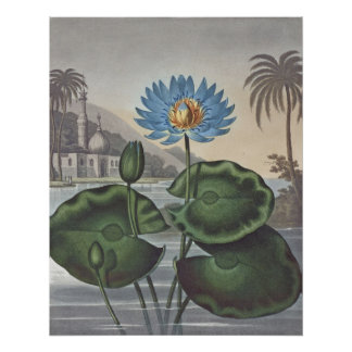 RJ Thornton - The Blue Egyptian Water-Lily Posters