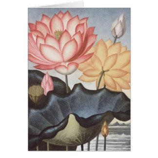 RJ Thornton - The Sacred Egyptian Bean - Lotus Greeting Cards