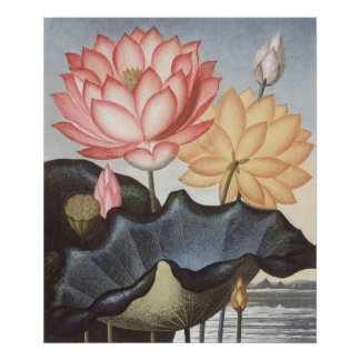 RJ Thornton - The Sacred Egyptian Bean - Lotus Poster