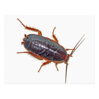 Roach on porcelain. postcard