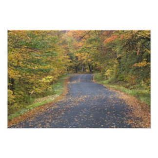 Roadside fall foliage, Southern Vermont, USA Art Photo