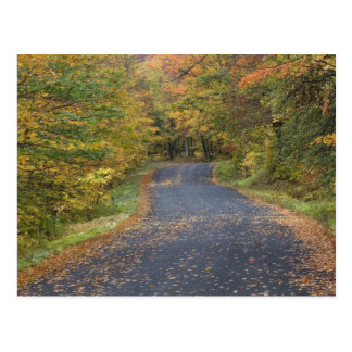 Roadside fall foliage, Southern Vermont, USA Postcard