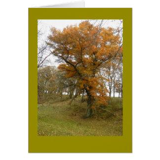 Roadside Oak Tree in Autumn on Blank Note Card