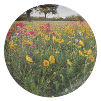 Roadside wildflowers in Texas, spring Plate