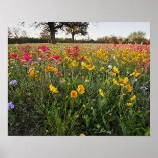 Roadside wildflowers in Texas, spring Poster